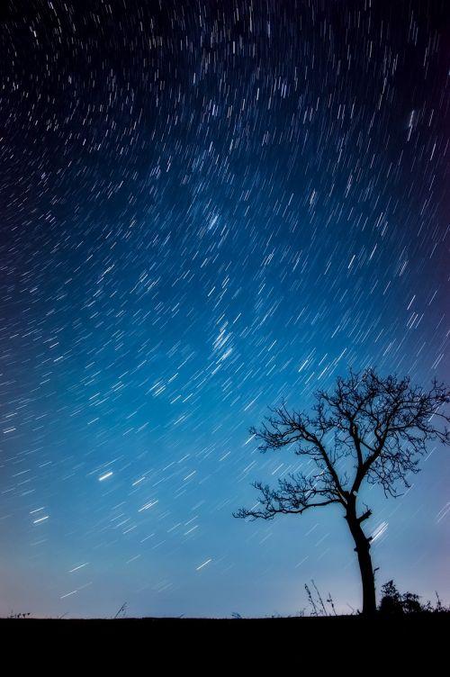 medis,kraštovaizdis,siluetai,žvaigždės,naktis,vakaras,gamta,lauke,ilga ekspozicija,Šalis,kaimas,gražus
