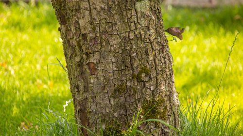 medis,gamta,nuostabi diena