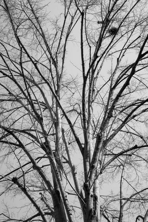 medis,filialai,ruduo,miškas,filialas,gamta,lapai,atvirkštinė lemputė,dangus,augalas,žiema,fonas,pesimistinis,tamsi,sudžiūvęs,nudrusių lapų,sausas lapai,lapai yra,lietingą,oras