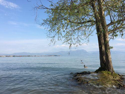 medis,ežeras,sirmione,dangus