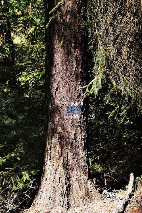 medis,požymiai,ženklas,žygiai,migracijos pobūdis,gamta