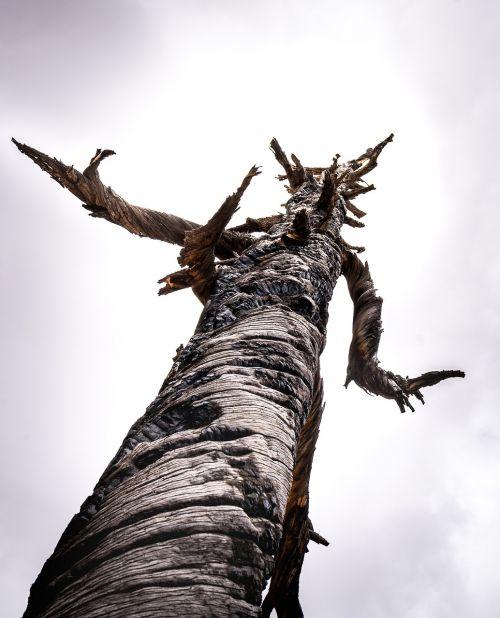 medis,dykuma,Utah,Nacionalinis parkas