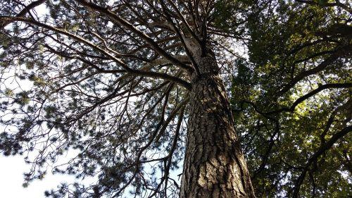 medis,stiprus,estetinis,jėga