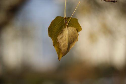 medis,gyvenimas,kraštovaizdis,miškas,taika,gamta,natūralus gyvenimas,žalias,švarus oras,ruduo,natūralus kalakutas,lapai yra,lapai,fotografija,mityba,stovykla