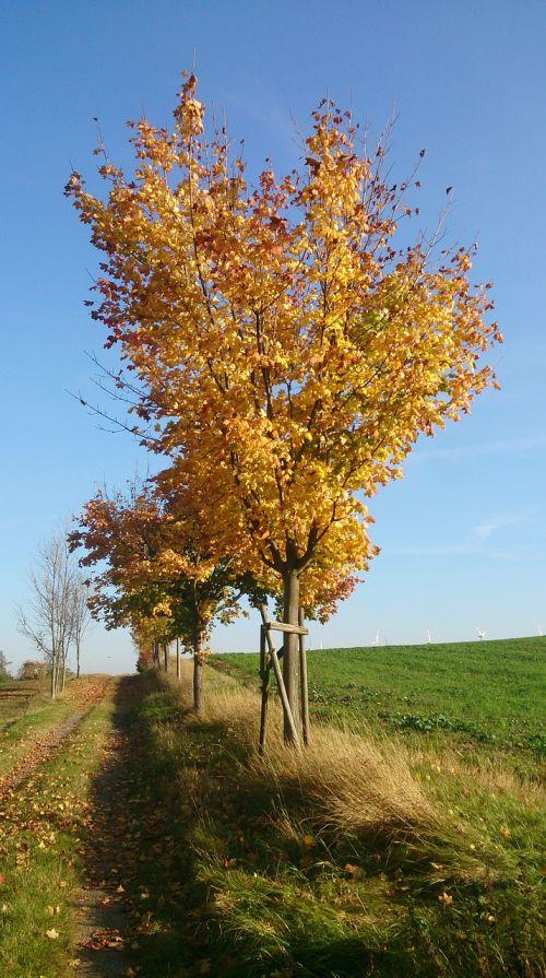 medis,ruduo,aukso ruduo,rudens spalvos,gamta,rudens nuotaika,farbenspiel,spalvinga,toli