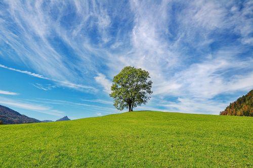 medis,dangus,gamta,debesys,kraštovaizdis,ruduo,rudens kraštovaizdis