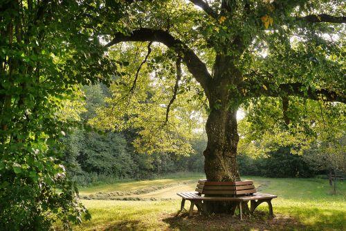 medis,bankas,gamta,poilsio vieta,poilsio zonos bankas,idilija,nuotaika,žalias,vienišas bankas