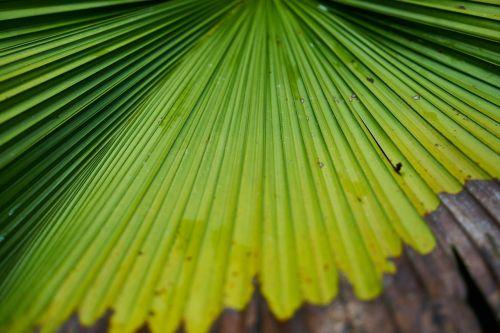 medis,lapai,delnas,makro,žalias,miškas,gamta,tekstūra,augalas,lapai yra,atogrąžų