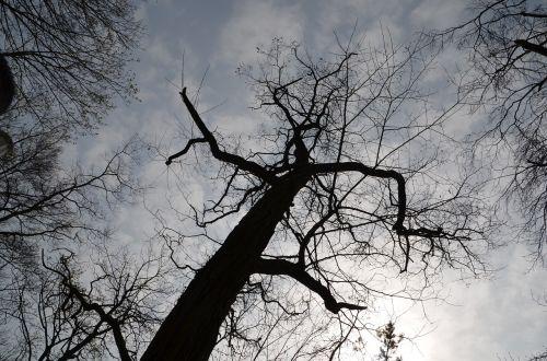 medis,siluetas,estetinis,filialai,debesuotumas