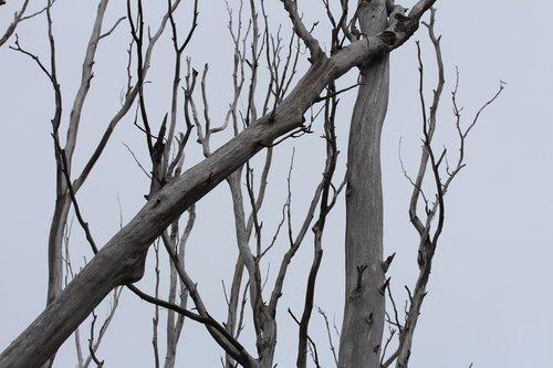 medis, pobūdį, mediena, filialas, sezonas, bagažinė, Žiemos, žievė, aplinka, lauke, dangus, šalto, miškas