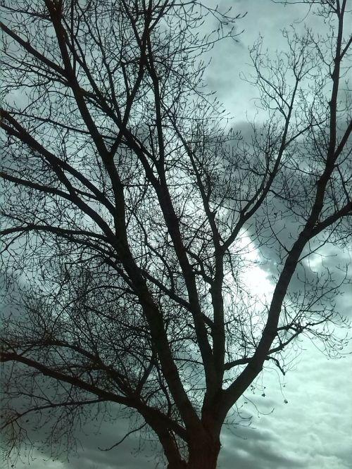 medis,kraštovaizdis,dangus,debesys,sausas medis,gamta,ruduo,bagažinė,džiovinti lapai,filialai,natiurmortas