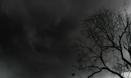 medis,gamta,tamsi,naktis,niūrus,siluetas,baisu,Halloween