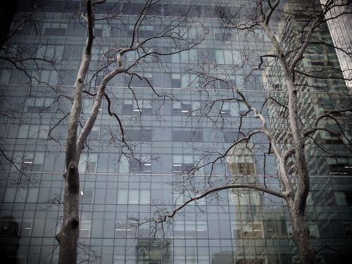 medis,pastatas,dangoraižis,atspindys,miesto miškas,miesto,miestas,kontrastas