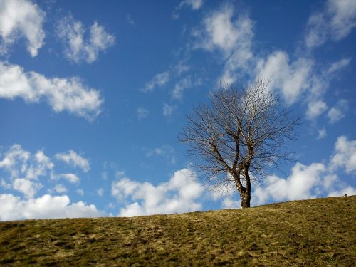 medis,Kahl,kalnas,dangus,debesys,žolė,graikiniai riešutai,mėlynas,vienišas,aišku,pavasaris