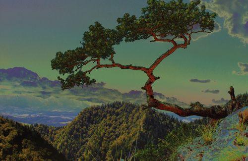medis, medis kalnas, pušis, iškraipyti atsargos, kalnai, pieninis, stilius, japanese, nuotaika, figūra, gamta, sulenktas medis, akmenys, tech, kraštovaizdis, Sokolica
