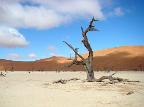 medis,dykuma,smėlis,kopos,kraštovaizdis,sossusvei,miręs vlei,Namibija,dangus,mėlynas,debesys,gamta,oras