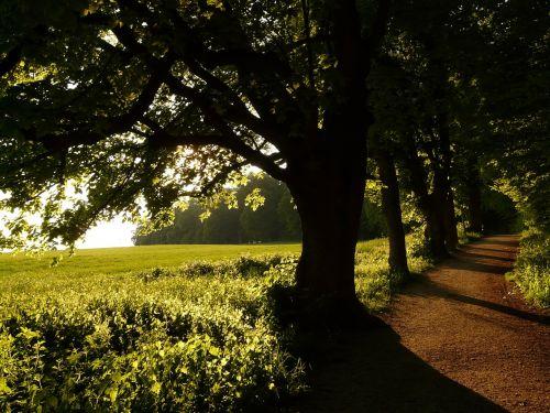 medis,alėja,atgal šviesa,saulė,laukas,toli,dangus,žalias,gentis,saulėlydis,filialas,miškas,gamta,lapai,pieva,miško takas,miško pakraštis,takas,žygiai,randweg,miško krašto kelias,miško takas,miško pakraščio takas,panoramos takas,Höhenweg,ulmer höhenweg,eselsberg,ulm,Promenada