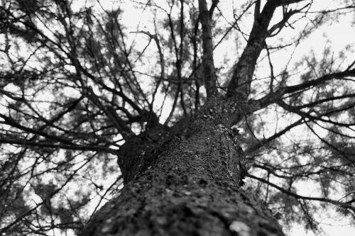 Medis,  Iš Arti,  Žievė,  Sezonas,  Filialas,  Ekologiškas