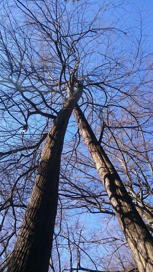 medis, gamta, meilė, mėgėjai, sanglauda, pavasaris