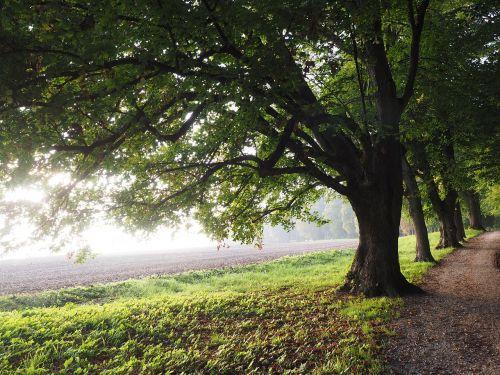 medis, alėja, atgal šviesa, saulė, laukas, toli, dangus, žalias, gentis, rūkas, migla, filialas, miškas, gamta, lapai, pieva, miško takas, miško pakraštis, takas, žygiai, randweg, miško krašto kelias, miško takas, miško pakraščio takas
