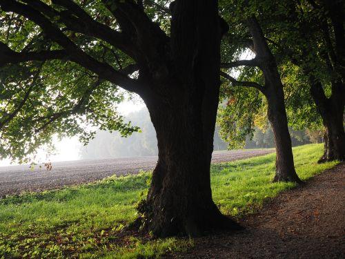 medis, alėja, atgal šviesa, saulė, laukas, toli, dangus, žalias, gentis, rūkas, migla, filialas, miškas, gamta, lapai, pieva, miško takas, miško pakraštis, takas, žygiai, randweg, miško krašto kelias, miško takas, miško pakraščio takas, panoramos takas, Höhenweg, ulmer höhenweg, eselsberg, ulm, promenada