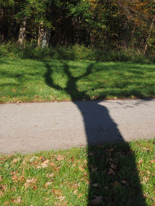 medis, ispaniškas, žurnalas, šešėlis