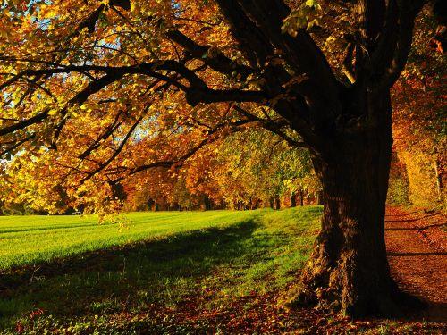 medis,alėja,atgal šviesa,saulė,laukas,toli,dangus,žalias,gentis,saulėlydis,lapai,ruduo,saulėtas,spalvinga,kritimo spalva,kritimo lapija,Citrinmedis,akmens kalkės,tilia cordata,linda,tilia,kalkių augalas,tilioideae,Mallow,malvaceae,žiema linda,akmens linda,filialas,miškas,gamta,pieva,miško takas,miško pakraštis,takas,žygiai,randweg,miško krašto kelias,miško takas,miško pakraščio takas,panoramos takas,Höhenweg,ulmer höhenweg,eselsberg,ulm,Promenada