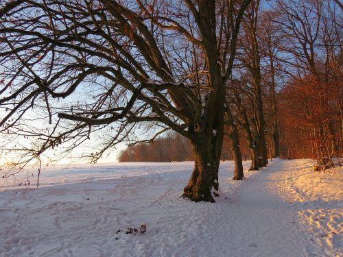 medis,alėja,sniegas,snieguotas,afterglow,žiema,šaltas,laukas,toli,dangus,žalias,gentis,filialas,miškas,gamta,miško takas,miško pakraštis,takas,žygiai,randweg,miško krašto kelias,miško takas,miško pakraščio takas,panoramos takas,Höhenweg,ulmer höhenweg,eselsberg,ulm,Promenada