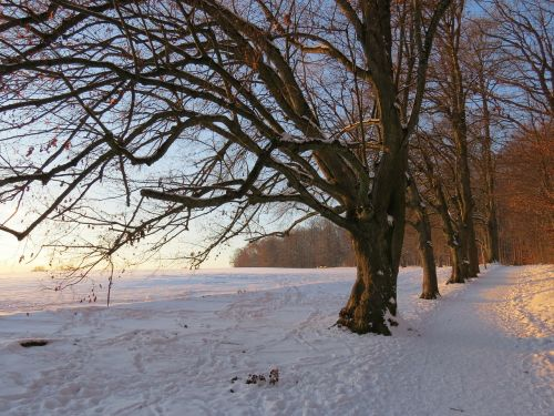 medis,alėja,sniegas,snieguotas,žiema,šaltas,laukas,toli,dangus,žalias,gentis,filialas,miškas,gamta,miško takas,miško pakraštis,takas,žygiai,randweg,miško krašto kelias,miško takas,miško pakraščio takas,panoramos takas,Höhenweg,ulmer höhenweg,eselsberg,ulm,Promenada
