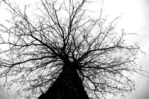 medis, gamta, bagažinė, ruduo