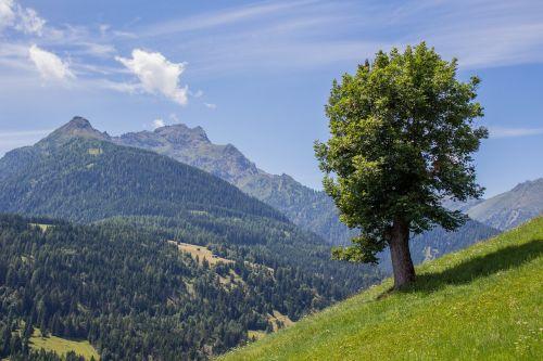 Medis,  Karintija,  Vasara,  Gamta,  Kraštovaizdis,  Austria,  Kalnai,  Alpių,  Laukas,  Alpių Pieva,  Pieva,  Žalias,  Žolė,  Sultingas Žalias,  Kalnų Pieva,  Dangus,  Debesys,  Vasaros Pieva,  Saulėtas,  Kalnuose