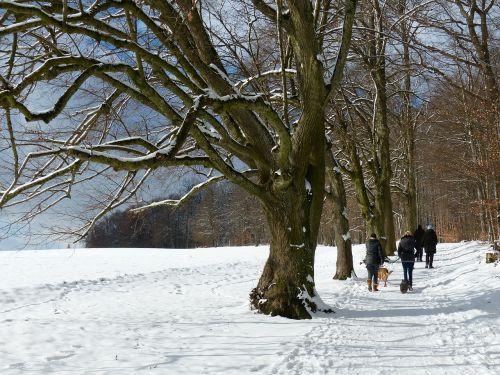 medis,alėja,sniegas,snieguotas,žiema,šaltas,laukas,toli,dangus,ruda,gentis,filialas,miškas,gamta,miško takas,miško pakraštis,takas,žygiai,randweg,miško krašto kelias,miško takas,žiemą,linda,lindenallee,miško pakraščio takas,panoramos takas,Höhenweg,ulmer höhenweg,eselsberg,ulm,Promenada,vaikštynės,keliautojas,šuo