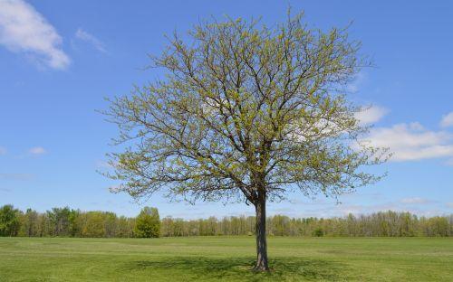 medis,pieva,pateiktas,gamta,kraštovaizdis,žalias,žolė,vasara,laukas,sezonas,pavasaris,kaimas,natūralus,lauke,kaimas,aplinka,medžių sodinimas,vasaros kraštovaizdis,miško peizažas,žalias laukas,vaizdingas,grazus krastovaizdis,šviesus,Šalis,pavasario peizažas,scena,parkas,debesų fonas,gamtos kraštovaizdis,peizažas