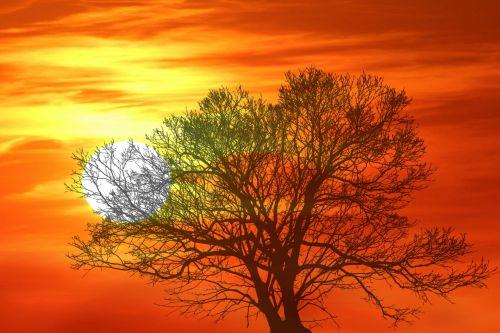 medis, saulėlydis, saulėtekis, žiema, plikas, filialai, Uždaryti, uždaryti & nbsp, dangus, oranžinė, švytėjimas, žėrintis, gamta, lauke, natūralus, Laisvas, viešasis & nbsp, domenas, medis saulėlydžio