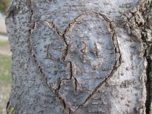širdis, medis, drožyba, valentine, Valentino diena & nbsp, meilė, medžio drožyba 1