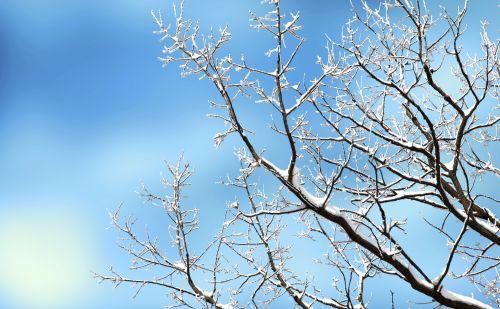 medis, sniegas, žiema, filialai, filialas, padengtas, dangus, mėlynas, sezonas, Uždaryti, Iš arti, plikas, gamta, lauke, balta, šaltas, Laisvas, viešasis & nbsp, domenas, sniegu padengtas medis