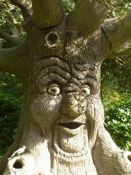 medžio veidas,veidas,medis,kalbėti,pasakos,fantazija,akys,gnarled,senas
