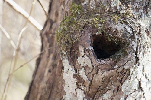 medžio mazgas,širdies formos medžio mazgas,tekstūra,širdis,mazgas,medis,gamta,miškas,samanos,mediena