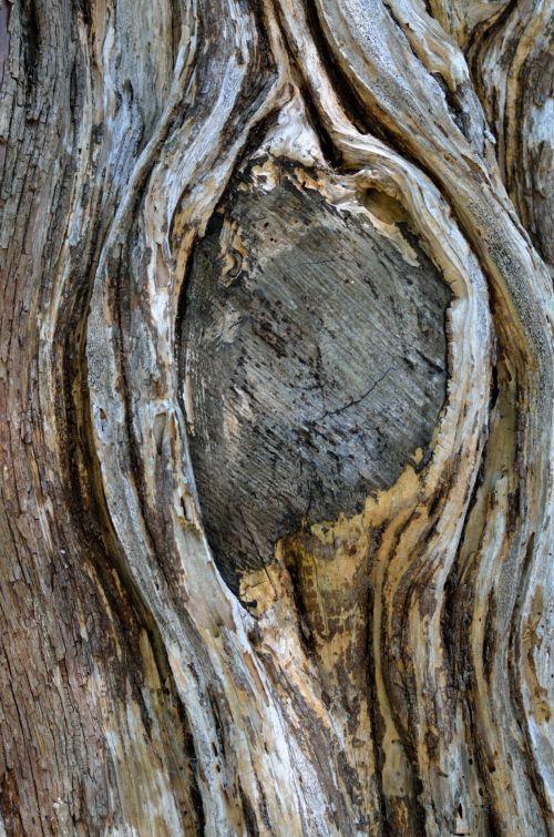 medis, mazgas, medis & nbsp, mazgas, mediena, gyvas & nbsp, ąžuolas, gamta, fonas, medis & nbsp, bagažinė, Iš arti, modelis, abstraktus, miškas, medžio mazgas
