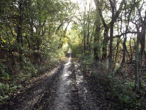medžiai, pievos, purvas, kelias, purvas, medžio linija