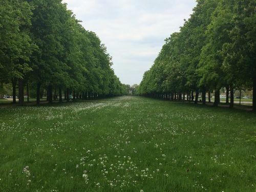 medžio pamušalas,pieva,medis