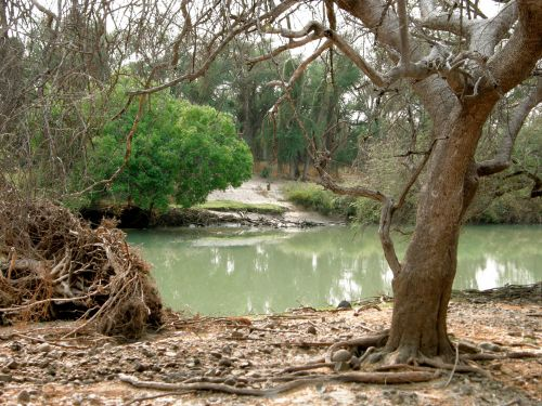 medis, vanduo, upė, žalias, medžiai, overhanging, filialai, medis & nbsp, bagažinė, medis ant upės kranto