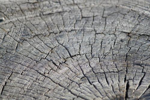 medis, medžiai, medis & nbsp, žiedai, medis & nbsp, žiedinė mediena, vintage, kaimiškas, medžio žiedai