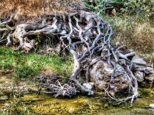 medis, medžiai, medis & nbsp, šaknys, šaknis, šaknys, gamta, tekstūra, modelis, lauke, kaimas, vanduo, srautas, srautas, medžių šaknys