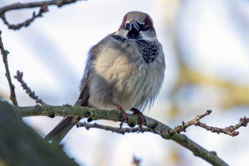 gyvūnų dalis & nbsp, kūno dalis, gyvūnų akis, gyvūnas & nbsp, šeima, gyvūnas & nbsp, kojas, ruduo, snapas, paukštis, mėlynas, filialas & nbsp, - & nbsp, augalas & nbsp, dalis, ruda, šalta & nbsp, temperatūra, gruodžio mėn ., eurazija, akis, plunksna, laukas, purus, maistas, pilka, medžio sparnas passer montanus