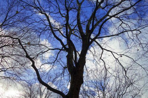 medžio viršūnė,medis,filialas,siluetas,gnarled,susukti,susukti,mėlynas dangus,debesys,gruodžio mėn. medis,gruodžio mėn .,žiemos medis,sezoninis