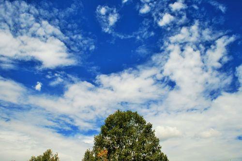 trejetas, dangus, mėlynas, debesys, balta, medis virš dangaus