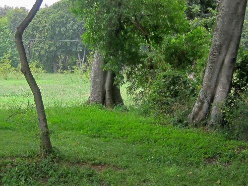 medžiai, lagaminai, žolė, žalias, augmenija, gamta, parkas, medžių kamienai ir žalia augmenija