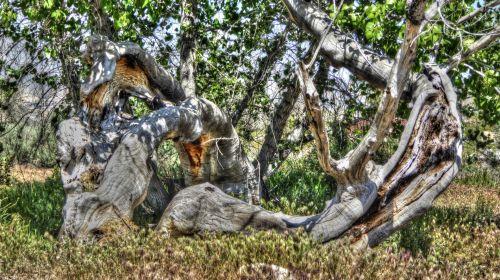 medis, medis & nbsp, bagažinė, bagažinė, lagaminai, gamta, lauke, augalas, augalai, šepetys, medžių kamienus