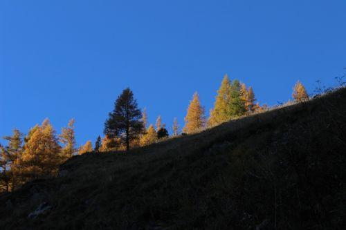 medžiai,ruduo,dangus,vakarinės šviesos lapidės,rudens spalvos,aukso ruduo